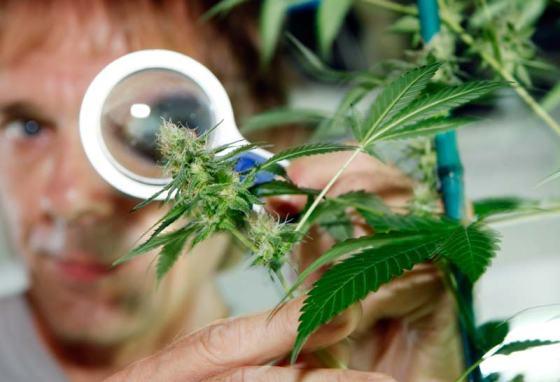 marijuana-science